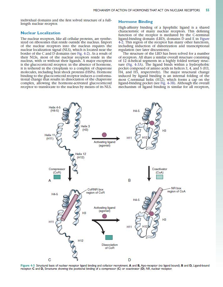 Williams Textbook of Endocrinology 12th [eBook]
